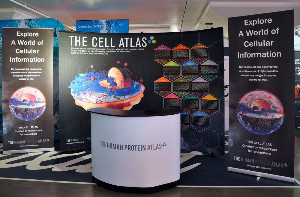 The Cell Atlas